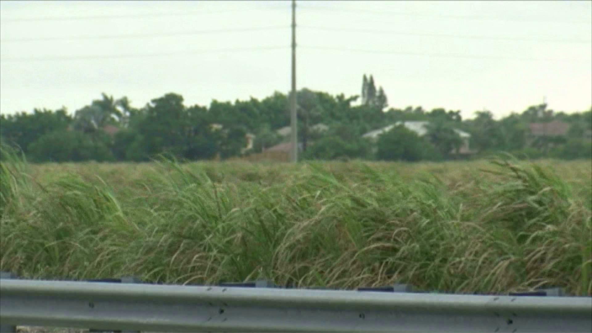 Actualizacion: Residente de Lake Worth murió al ser impactada por un rayo.