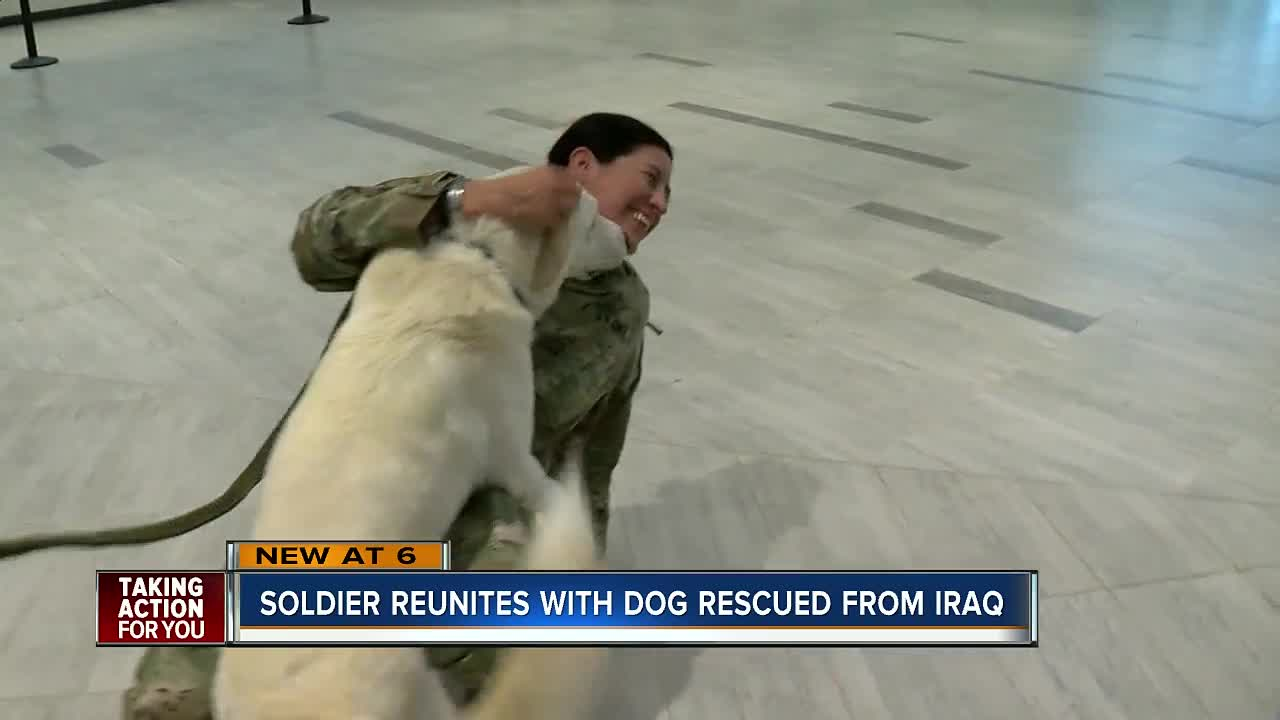 Us Soldier Reuniting With Dog She Rescued More Than A Year Ago In