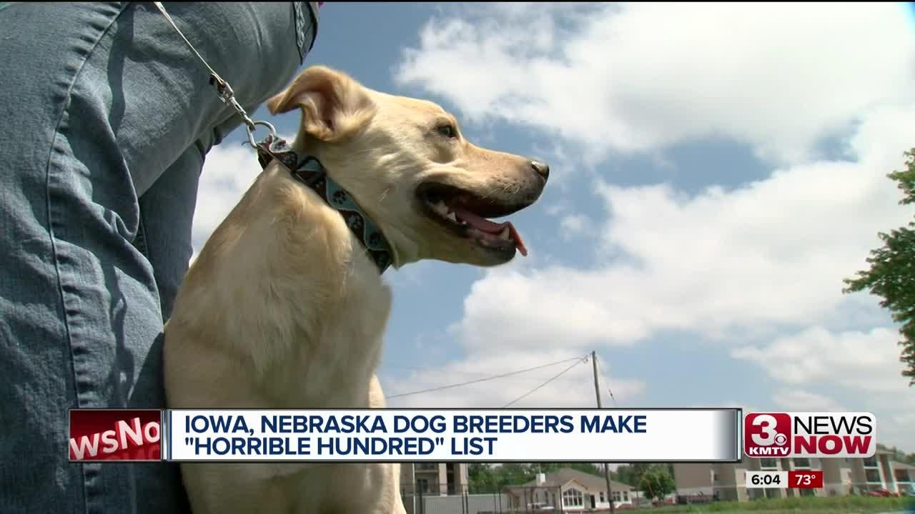 dog breeders in nebraska